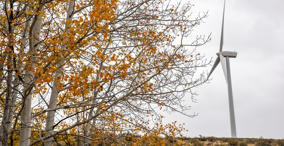 Fall leaves at Wild Horse Wind and Solar facility