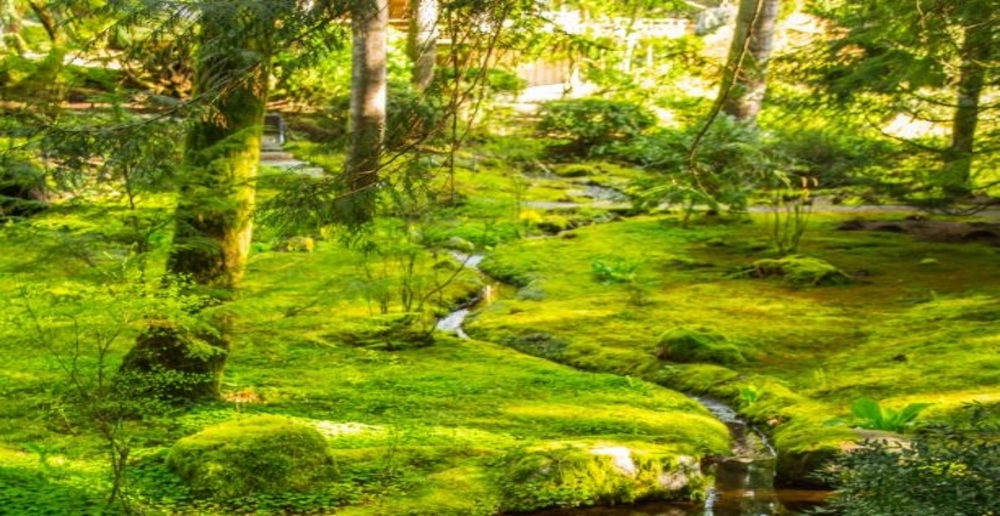 A Bloedel Reserve creek passes moss and shrubs on the ground.