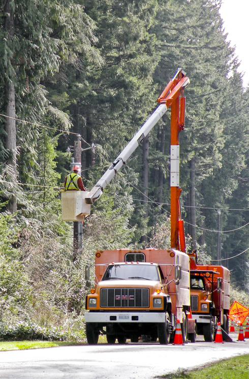 Crews trim trees on the island
